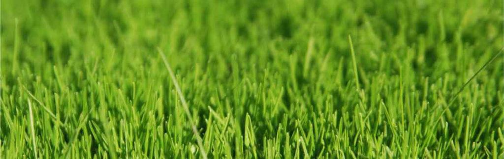 giardinaggio treviso manutenzioni verde